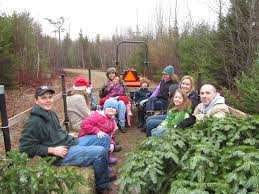 harvest a christmas tree the old fashioned way in orland act out