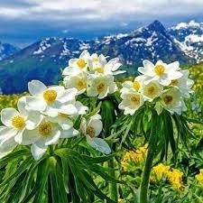 my lovely flowers gardens home