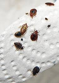 bugs in bedroom bill to require hotels to have bed bug inspections every 6 months