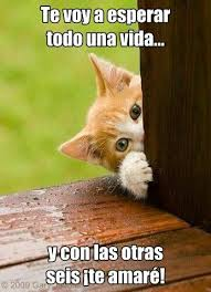 imagenes de gatitos sin frases lindos gatitos con frases fotos de perritos tiernos