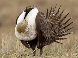 Montana birds images Hunting in beaverhead county southwest montana wildlife and jpg