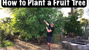 gardening for beginners how to sucessfully plant a fruit tree in