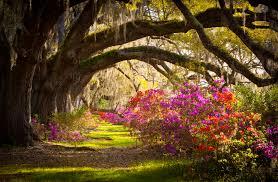 South Carolina landscapes images Commercial landscape management forever green of charleston jpg