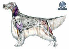 Dog Body Parts Anatomy Basic Dog Anatomy Animal Health Class Pinterest Dog Anatomy