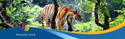wildlife tours images Wildlife tour packages wild and heritage karnataka trail jpg