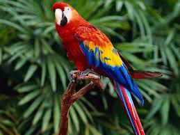pretty bird natalie inkpin