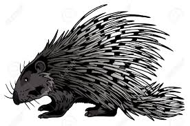 porcupine clipart black and white pencil and in color porcupine
