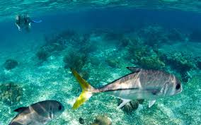 New Mexico snorkeling images 10 snorkeling spots you need to add to your bucket list travel jpg