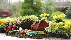 stihl usa news beginners guide to planting flowers