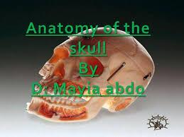 Base Of The Skull Anatomy Anatomy Of The Skull Authorstream