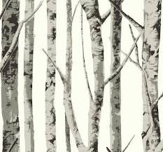 birch trees grey trees on a white background wab 1008