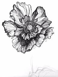 Flower Drawings Black And White - poppies new print coming to the patternbank shop soon u2026 awesome