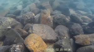 snorkeling magnetic island goeffrey bay youtube