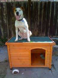 Dog Igloo My Dogs Don U0027t Understand How To Use Their Dog House Funny