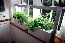 Window Sill Garden Inspiration Indoor Herb Garden Plus Kitchen Herb Garden Plus Growing Herbs