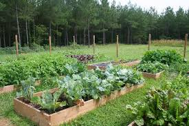 How To Make A Raised Bed Vegetable Garden - pathways for a raised bed vegetable garden u2013 home garden joy