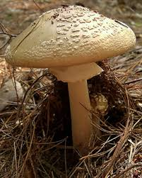 how do i tell if a mushroom is safe to eat