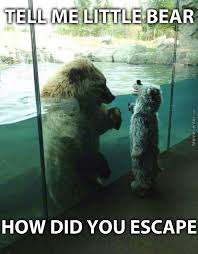 Patient Bear Meme - little bear memes best collection of funny little bear pictures