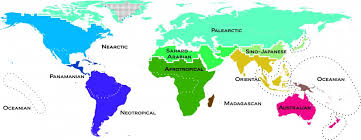 the map of the earth updated map of zoogeographic regions and realms business insider
