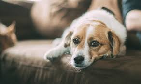 pet euthanasia seven questions you about pet euthanasia but are