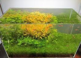 Live Plants In Community Aquariums by 97 Best Aquarium Plants Images On Pinterest Tropical Fish