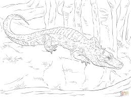 chinese alligator coloring page free printable coloring pages