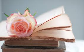 rose on a book hd wallpaper hd latest wallpapers