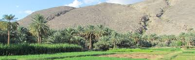 the date palm a special plant from the tropical