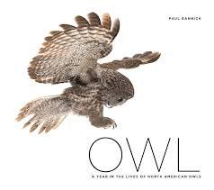 10 spectacular owl photos you have to see audubon