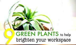 plants for office desk best office desk plants musicyou co