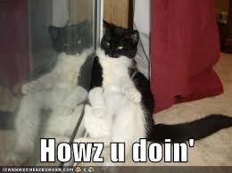How You Doin Meme - lolcats how you doin lol at funny cat memes funny cat
