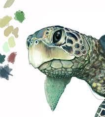 drawn sea turtle illustration pencil and in color drawn sea