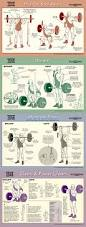 how to deadlift an illustrated guide barbell squat overhead