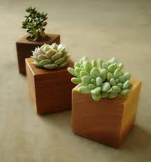Cactus Planters by Modern Indoor Planter Easy Modern Indoor Planters For Succulents