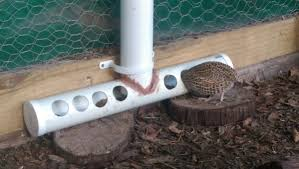Best Backyard Chicken by The Best Ever Quail Feeder Google Search Backyard Chickens And