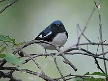 Nc Backyard Birds List Of Birds Of North Carolina Wikipedia