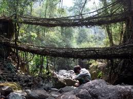 the living bridges u2013 babbles and tattles of point