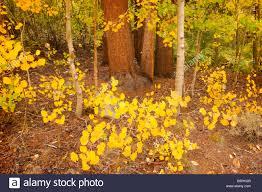 fall color middle fork bishop creek eastern sierra