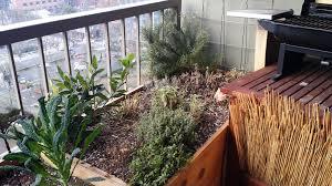 when to water an herb garden in winter ask an expert