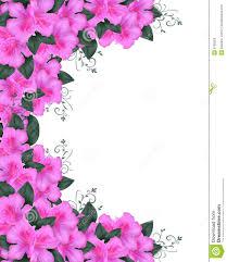 invitation border pink azaleas royalty free stock image image