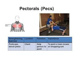 abdominals strengthening exercise locationfunctionimportance curl