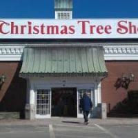 tree shop retractable awning decore