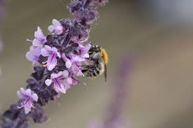 Flowers Bees Pollinate - the flowers are gone but why honey bee suite