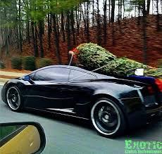 christmas tree delivery christmas tree delivery level mode bodybuilding forums
