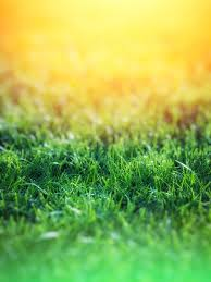 Free Green by Green Grass Over Yellow Background Free Stock Photo