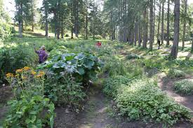 Osu Botanical Gardens by A Postcard From Solovki Origins Current Events In Historical