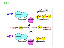 metabolism energy and enzymes ppt download