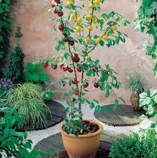 homebase patio heater patio fruit trees homebase home design ideas