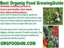 growing potatoes organic fertilizer youtube