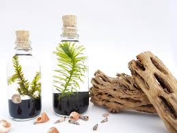 live aquatic plants terrarium kit bottle with cork for office